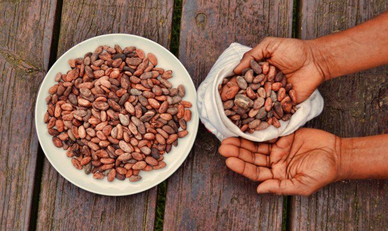 Какаовите зърна - екзотика и магия